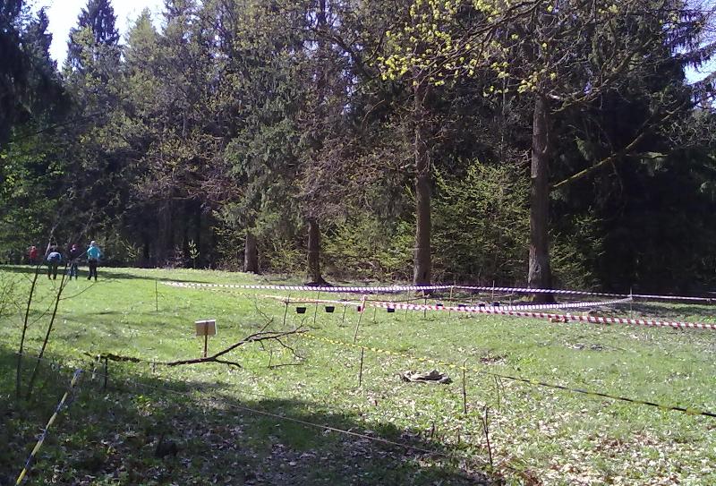 Лесная поляна стала спортивной площадкой